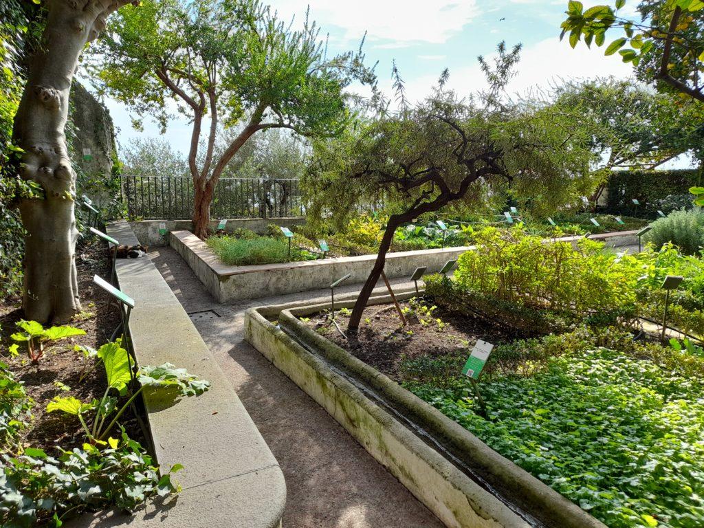 Giardino della minerva particolare con aiuole e canali per l'irrigazione